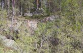 skogen yogastudio
