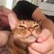 katt och yoga