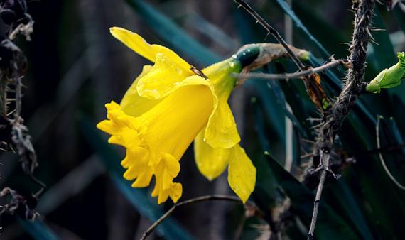 Att tänka på under coronatider – tips ur ett ayurvediskt perspektiv