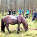 yogavandring till häst